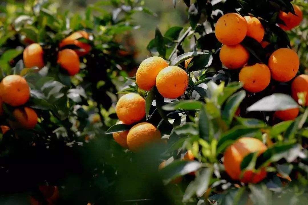 关于地标农产品 这些知识您有必要了解一下 第3张